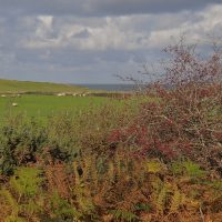 Sea view from Cemaes Comminity Woodland