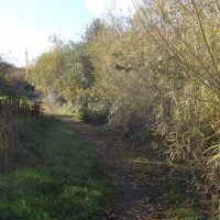 Path in Cemaes Community Woodland