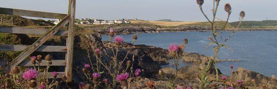 Coastal view through thistles